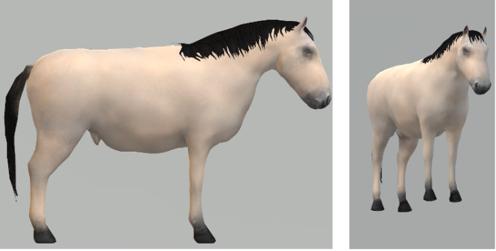 Réunion – animaux 3D